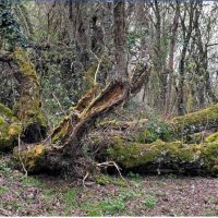 Árboles ruta molinos